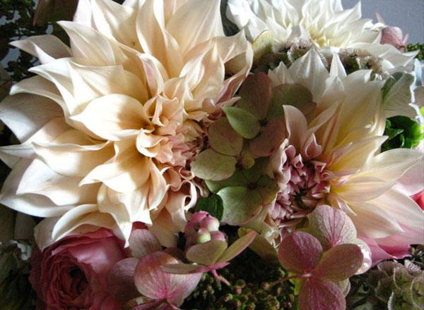 wedding-dahlias