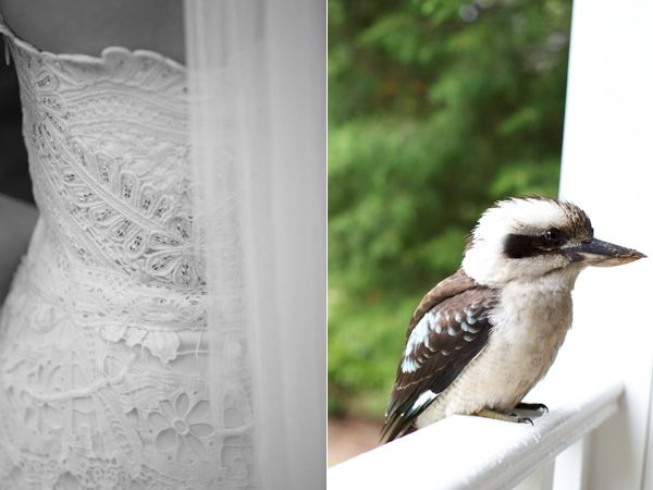 Lace Dress Kookaburra Kingfisher