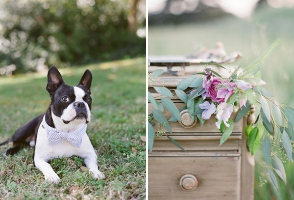 Dog Ringbearer Ideas