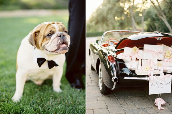 bulldog-tux-wedding-day