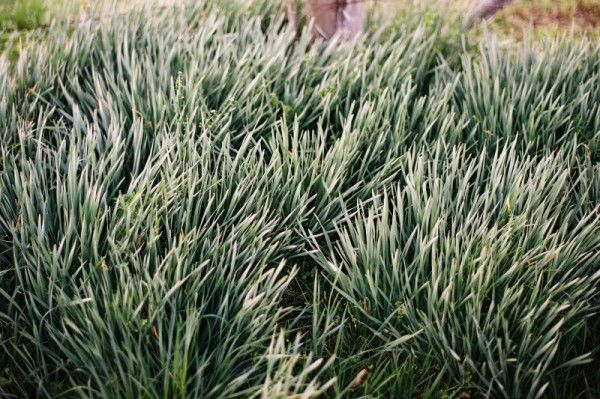 engagement-photo-green-grass-tennessee-600×399