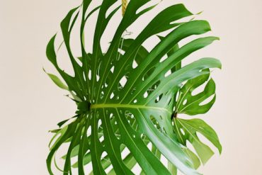 Giant Tropical Leaf Pendant Light