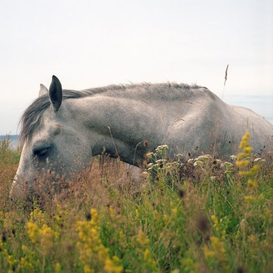diary of a summer horse