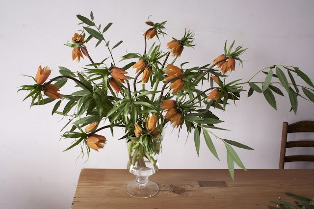 fritillaria orange green