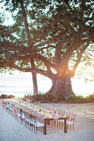 beach tree reception decor