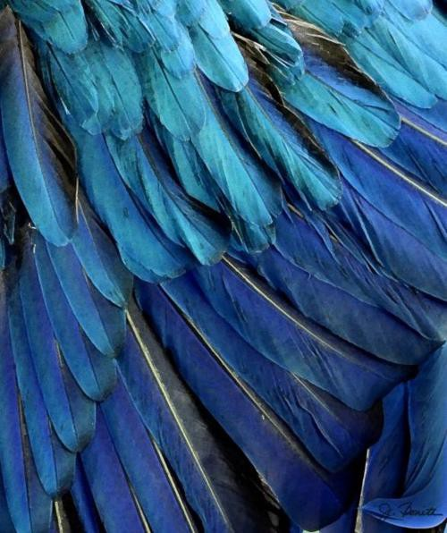 blue feather decor