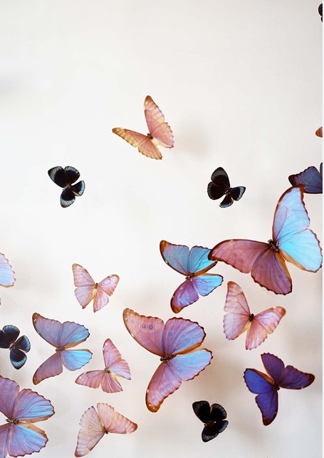 blue pink purple butterflies