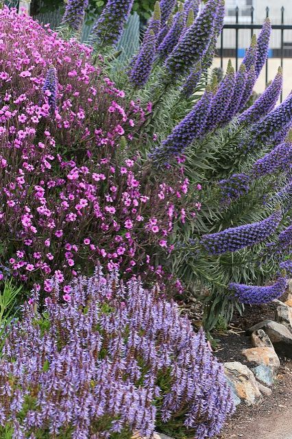 botanical gardens purple pink