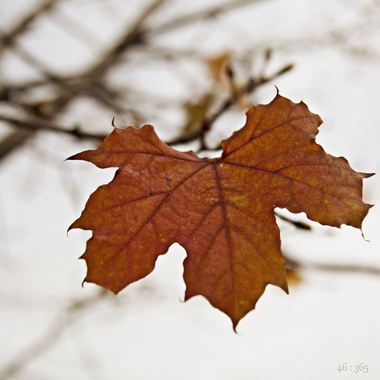 brown fall leaf