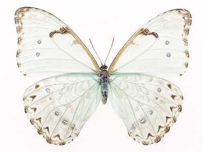 butterfly gold turquoise