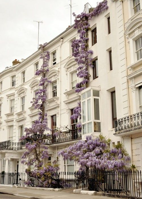 lavender flowers building