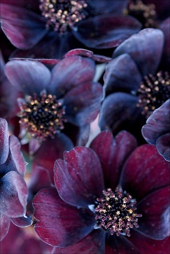 deep purple wedding flowers