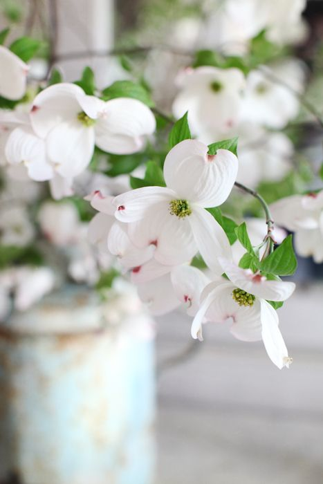 dreamy white flowers