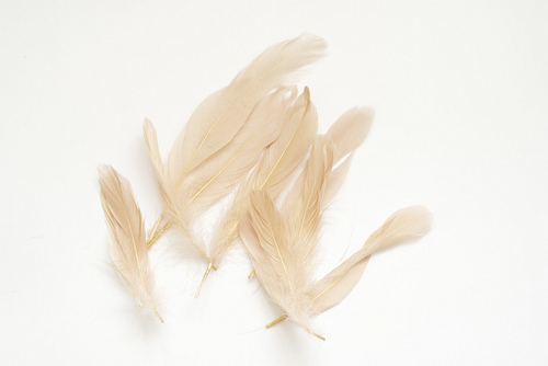 feathers by field natural wedding decor