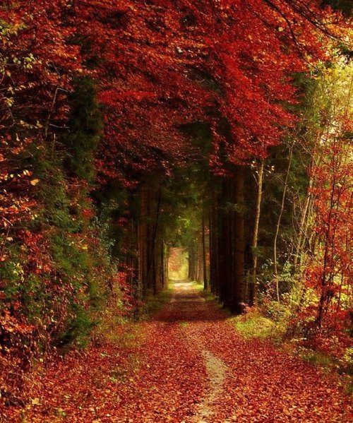 forest path bavaria germany