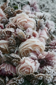 frozen flowers pink green