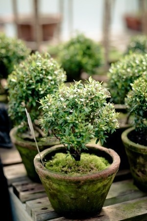 green moss potted plants