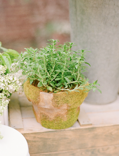 green potted plant wedding centerpiece