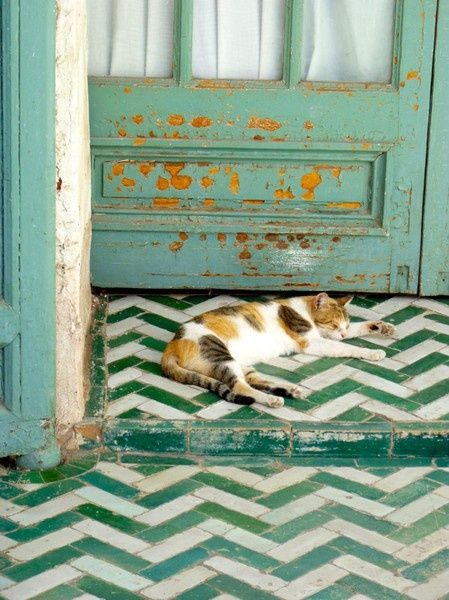 green white floor cat
