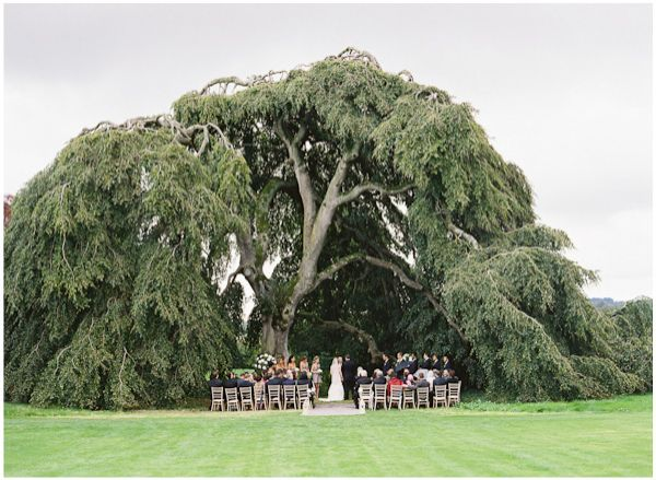 ireland wedding giant tree