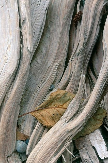 leaf gray wood
