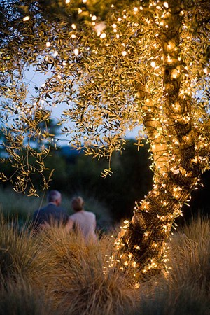 lighted tree romance