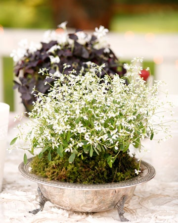 natural potted white flower centerpiece