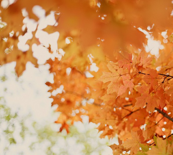 orange leaves fall wedding