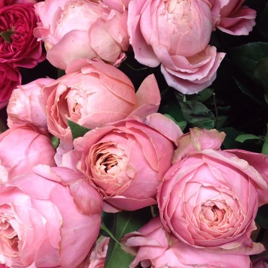 pink colored roses