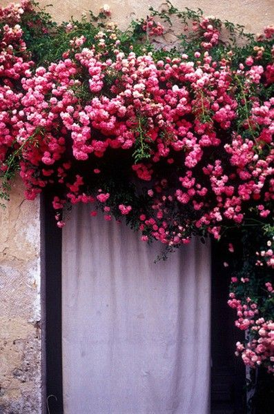 pink flower doorway