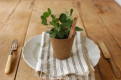 potted plant natural table setting