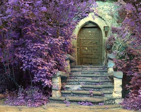 purple cottage beautiful