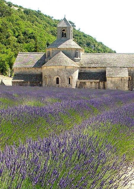 purple lavender field church