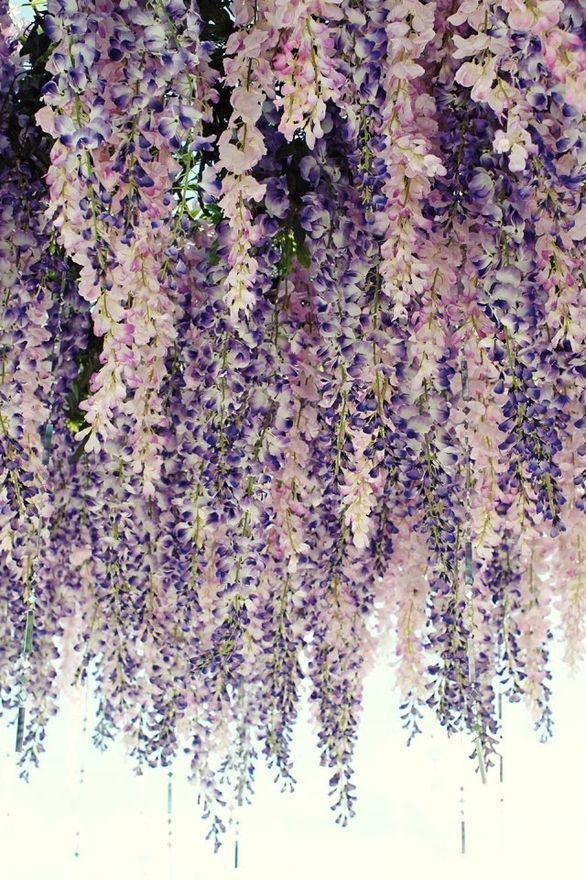 purple pink white hanging flowers