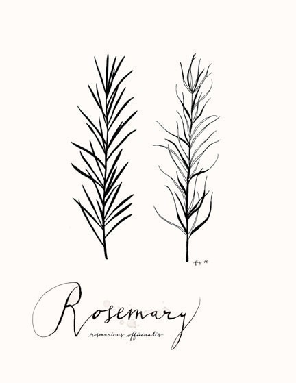 rosemary culinary art collection