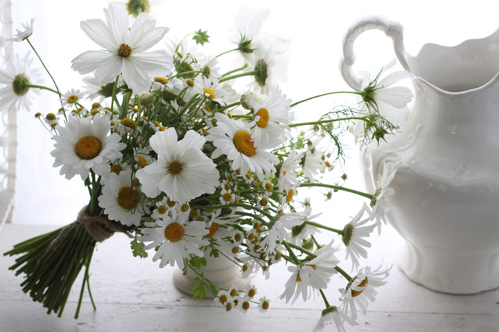 simple white daisy flowers amy merrick