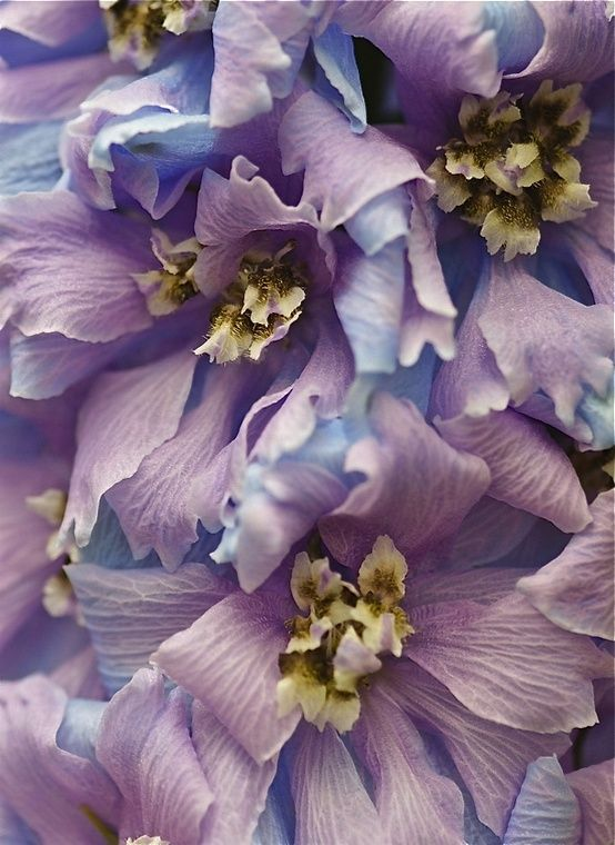 soft romantic purple flowers