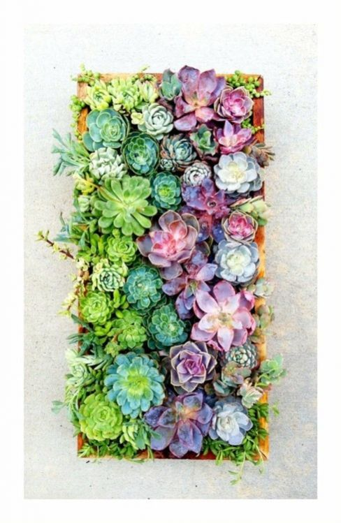 succulents multi colored