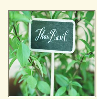 thai basil sign