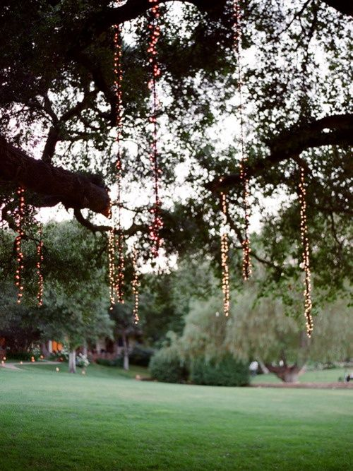 tree hanging lights