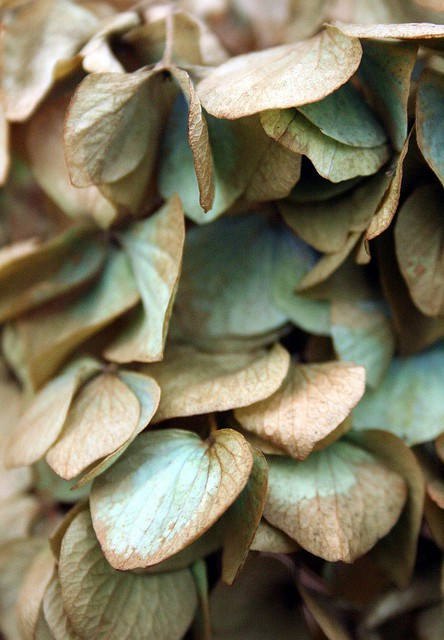 turquoise gold leaves