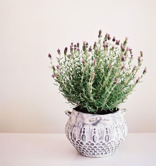 wedding reception decoration ideas potted lavender plant