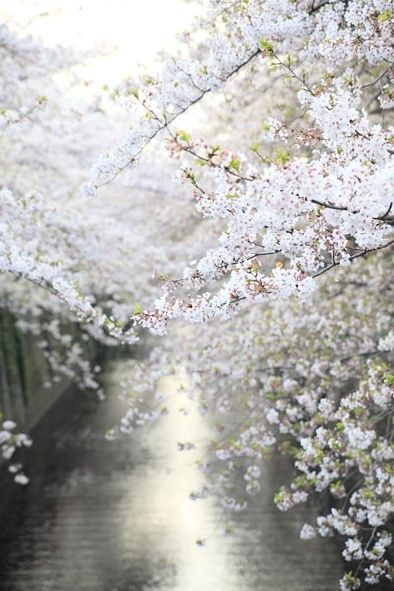 white flowering branches