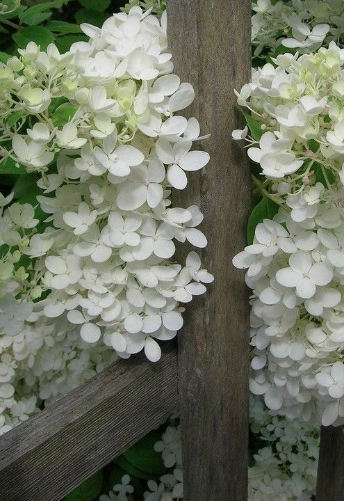 white flowers brown gate