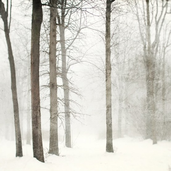 winter white forest scene
