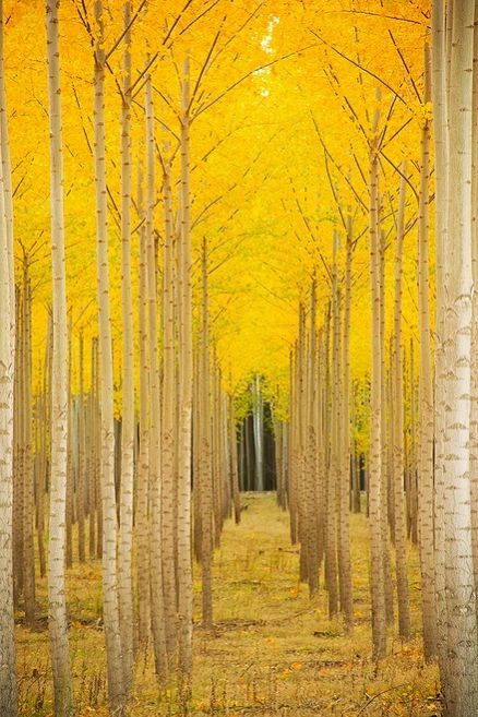 yellow-tree-wedding-venue