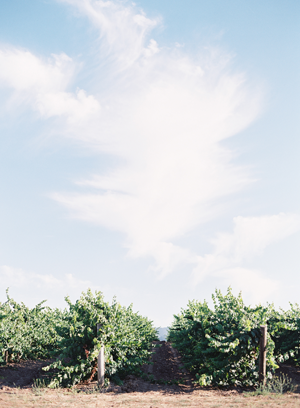rustic-wedding-vineyard-ideas