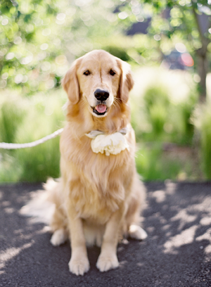 Dog Ring Bearer Ideas Once Wed