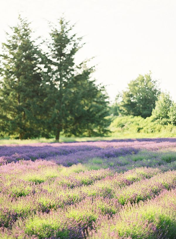 sequim-lavender-farm