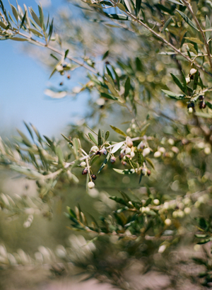 olive-grove-wedding